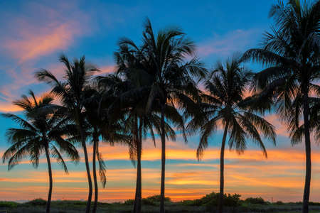 Palm trees in Ocean beach at sunrise in Florida Keys