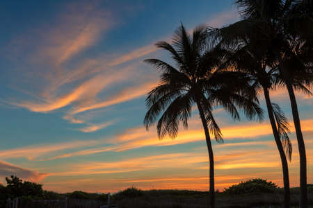 South beach with palm trees at spectacular sunrise in Miami Beach, Florida. Sunrise view with much copy space.