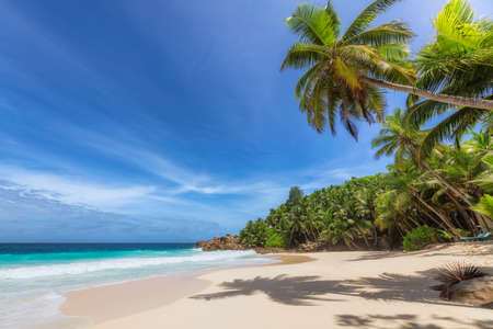 Paradise Caribbean beach. Sunny beach with palm and turquoise sea in Jamaica tropical island. Summer vacation and tropical beach concept.