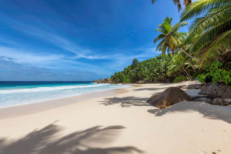 Paradise tropical beach. Sunny beach with palm and turquoise sea. Summer vacation and tropical beach concept.