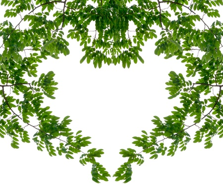 heart shaped: Heart space shape from green leaf