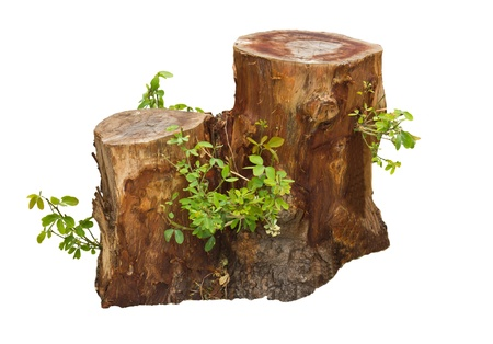 tree stump: Tree stump and green leaf isolated on white