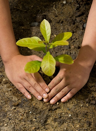 Dirty and muddy of male hands and tree ground plant Stock Photo
