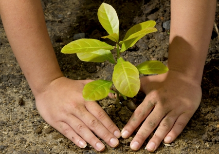 global warming: Dirty and muddy of male hands and tree ground plant Stock Photo