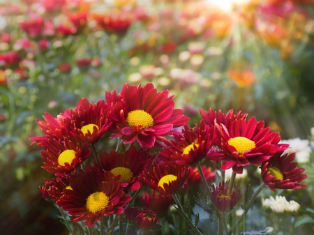 Beautiful flower and sunbeam in the morning Stock Photo - 12745698