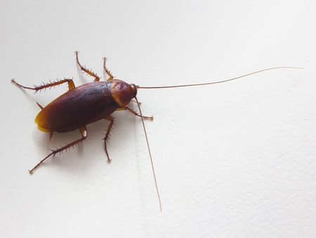 Close up of cockroach