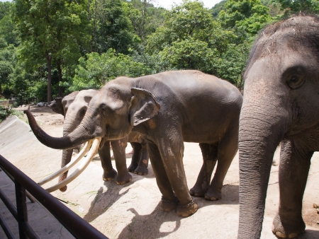 Elephants Stock Photo - 13920255