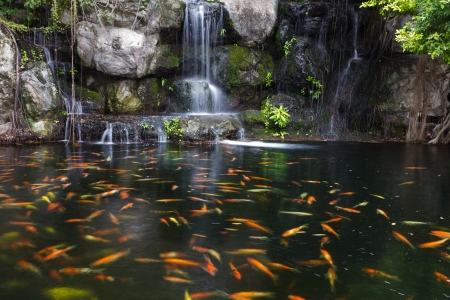 Koi fish in pond at the garden with a waterfall photo