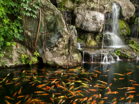 Koi fish in pond at the garden with a waterfall Stock Photo - 14304262