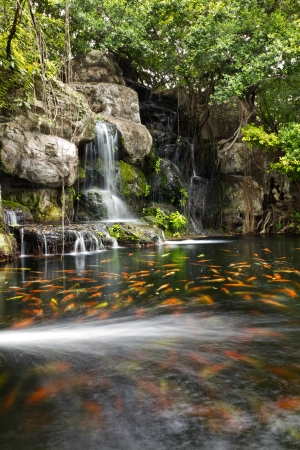 garden pond: Koi fish in pond at the garden with a waterfall