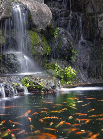 Koi fish in pond at the garden with a waterfall Stock Photo - 14304260