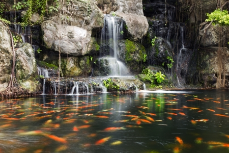 Koi fish in pond at the garden with a waterfall Stock Photo - 14304267