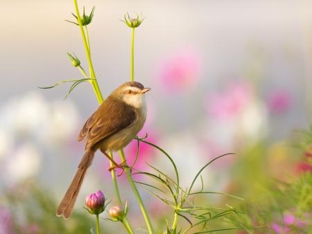 Bird on flower in the garden Stock Photo