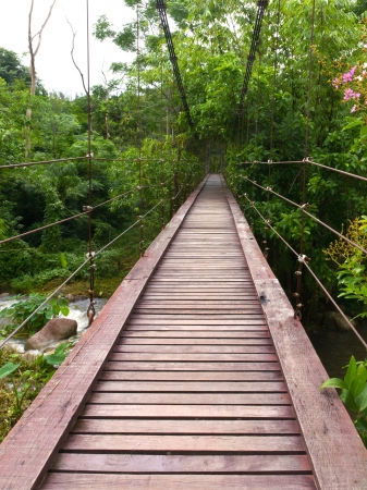 Wooden rope walkway through in a rainforest photo