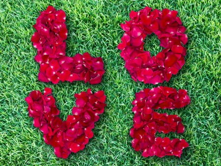Word of love made from red rose petals on green grass field photo