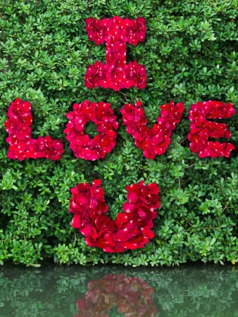 Word of love made from red rose petals on green leaf and reflect in water photo