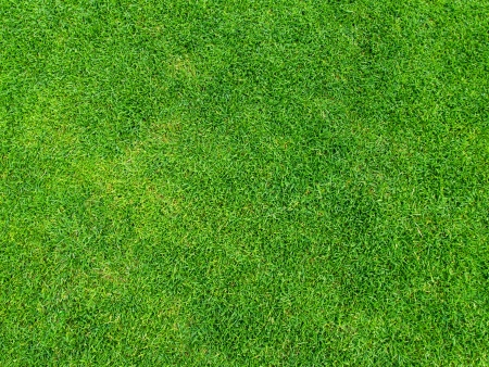 grass field: Green grass texture from golf course for background