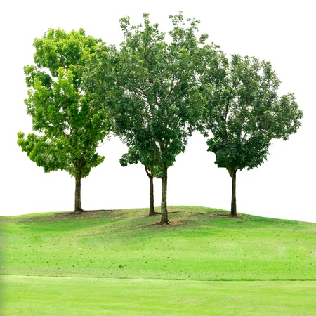 Tree group on grass field isolated on white with clipping path