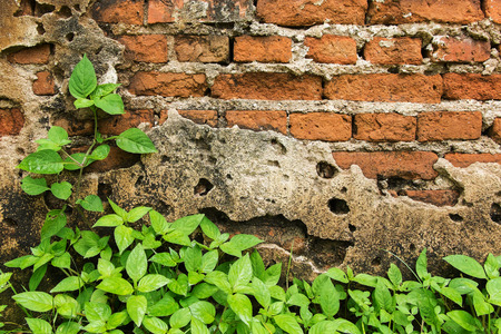 Plant on an old brick wall Stock Photo