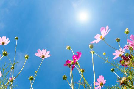 flower against blue sky under sunlight Stock Photo