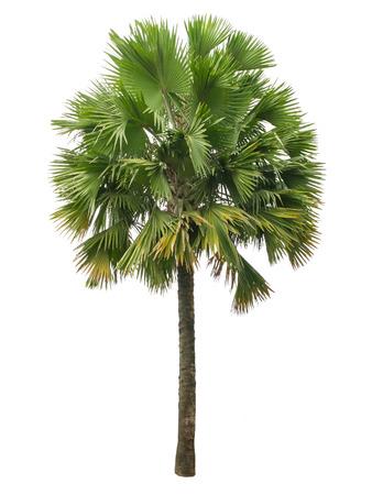 팜 나무는 흰색 배경에 고립 스톡 콘텐츠