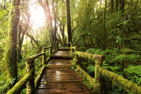 wooden walkway through in deep rainforest