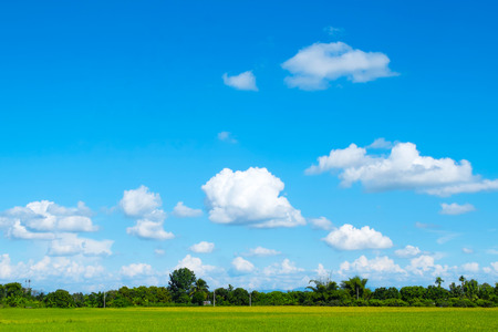 green grass field and bright blue sky Stock Photo