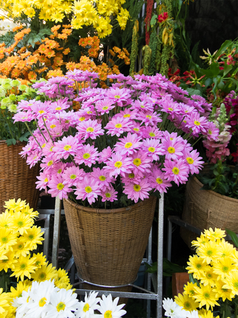 flower at shop