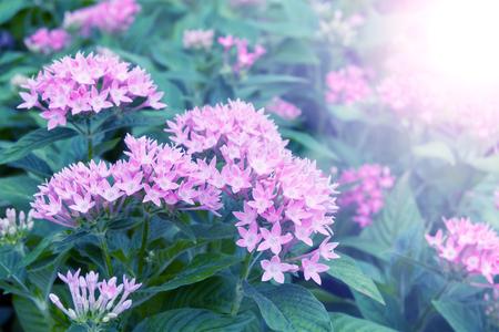 Pink flowers in winter morning season