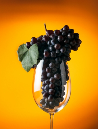 Branch of ripe grapes in a glass of wine photo