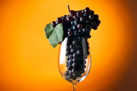 winy: Branch of ripe grapes in a glass of wine