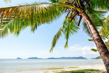 Perfect beach in Thailand with white sand, palm trees and blue sky photo