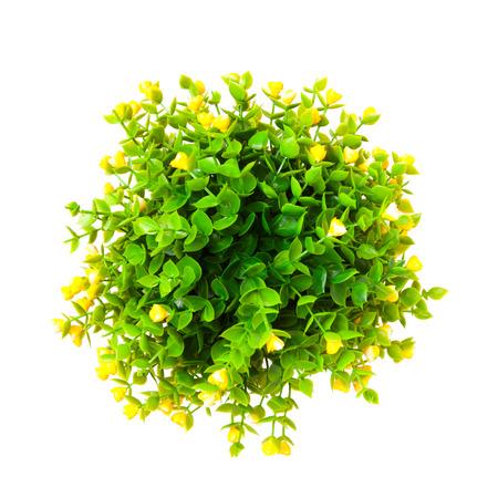 노란 싹이 관 상용 식물 위에서 격리 된 흰색 배경에 쐈 어.