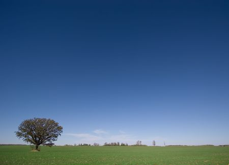 A lone tree in a green field with vast clear blue sky