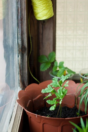 cosy: Cosy balcony garden - flowers in front of the window