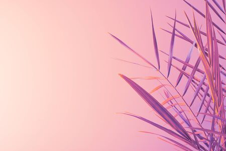 Tropical lilac golden palm leaves on pastel pink background. Minimal summer concept. Flat lay, copy space