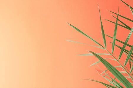Tropical palm leaves on lush lava colorful background. Minimal summer trendy concept. Flat lay, copy space Banque d'images