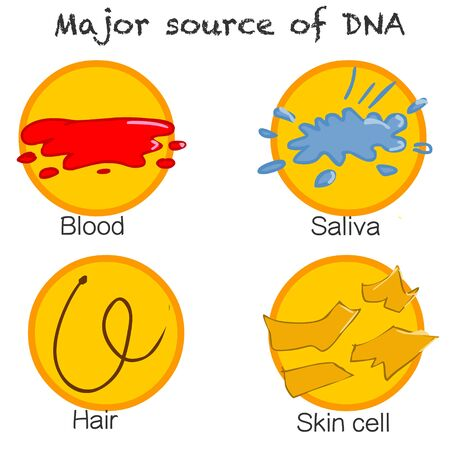Isolation DNA.  Major source of DNA. DNA is found in all our Cells, Body Fluids and Tissues. Blood, Sweating, Saliva, Semen Urine, Hair, Feces, Vomiting.  Criminal medicine. detective. Evidence, proof