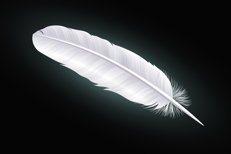 White feather on a black background. Vector Illustration