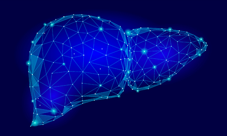 Triángulo de órganos internos del hígado humano Low Poly. Puntos conectados tecnología de color azul medicina modelo 3d parte del cuerpo sano ilustración vectorial arte