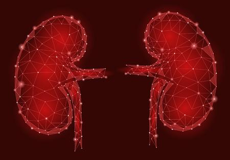 Kidneys internal organ men 3d low poly geometric model. Stock Vector - 83802866