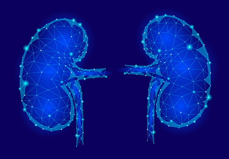 Kidneys internal organ men 3d low poly geometric model. Urology system medicine treatment. Future science technology polygonal geometric blue vector illustration