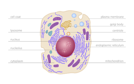 Animal human cell structure educational science. Microscope 3d eukaryotic nucleus organelle medicine technology analysis. Glowing colored biology poster template isolated line vector illustration