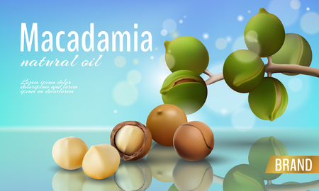 Realistic 3d macadamia nut oil cosmetic shell ad template. Branch leaves nutshell. Light summer sky sunny beauty care. Promotional detailed poster template reflection defocused vector illustration Illustration
