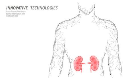 Nieren inneres Organ Männer Silhouette 3d Low-Poly-geometrisches Modell. Systemmedizinische Behandlung der Urologie. Polygonale geometrische Drahtgitter-Vektorillustration der Zukunftswissenschaftstechnologie technology Vektorgrafik