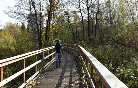 Young woman running the park. Wooden bridge and flooring with railing. Autumn sunny weather, yellow birch leaves forest. Active sport and fitness outdoors.