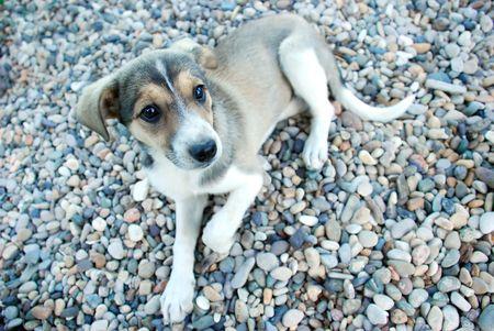 nibbling: doggie- nibbling Stock Photo