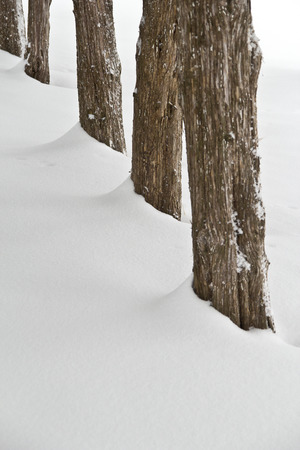 Tree Trunks in Snow Imagens