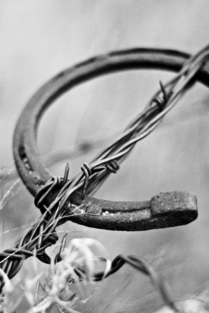 Horseshoe in Barbed Wire
