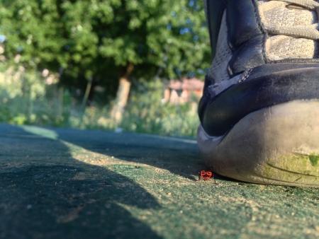 beside: ladybug beside a shoe